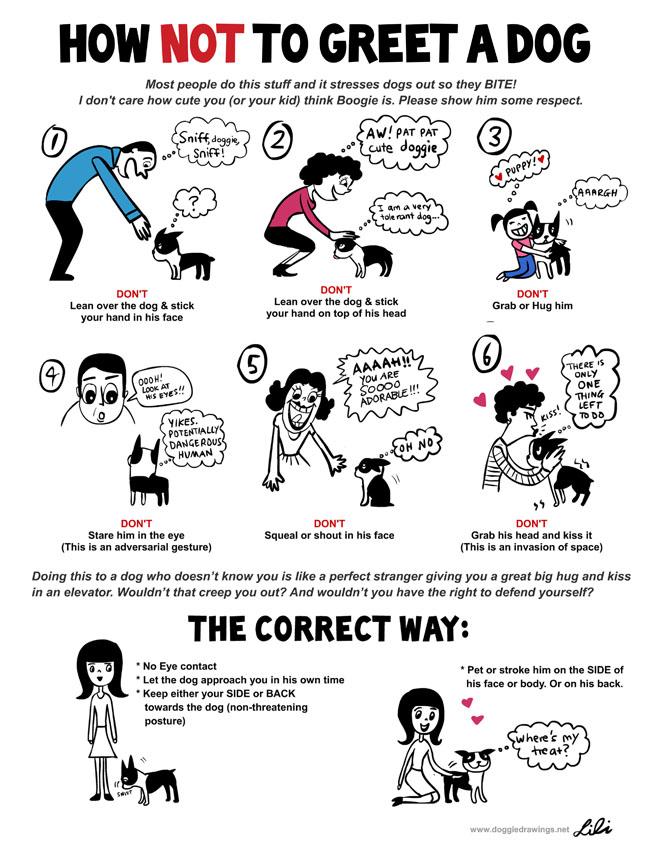 Hoe een hond niet te begroeten