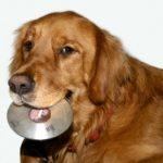 Hond met CD