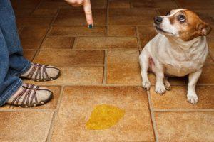Hond straffen