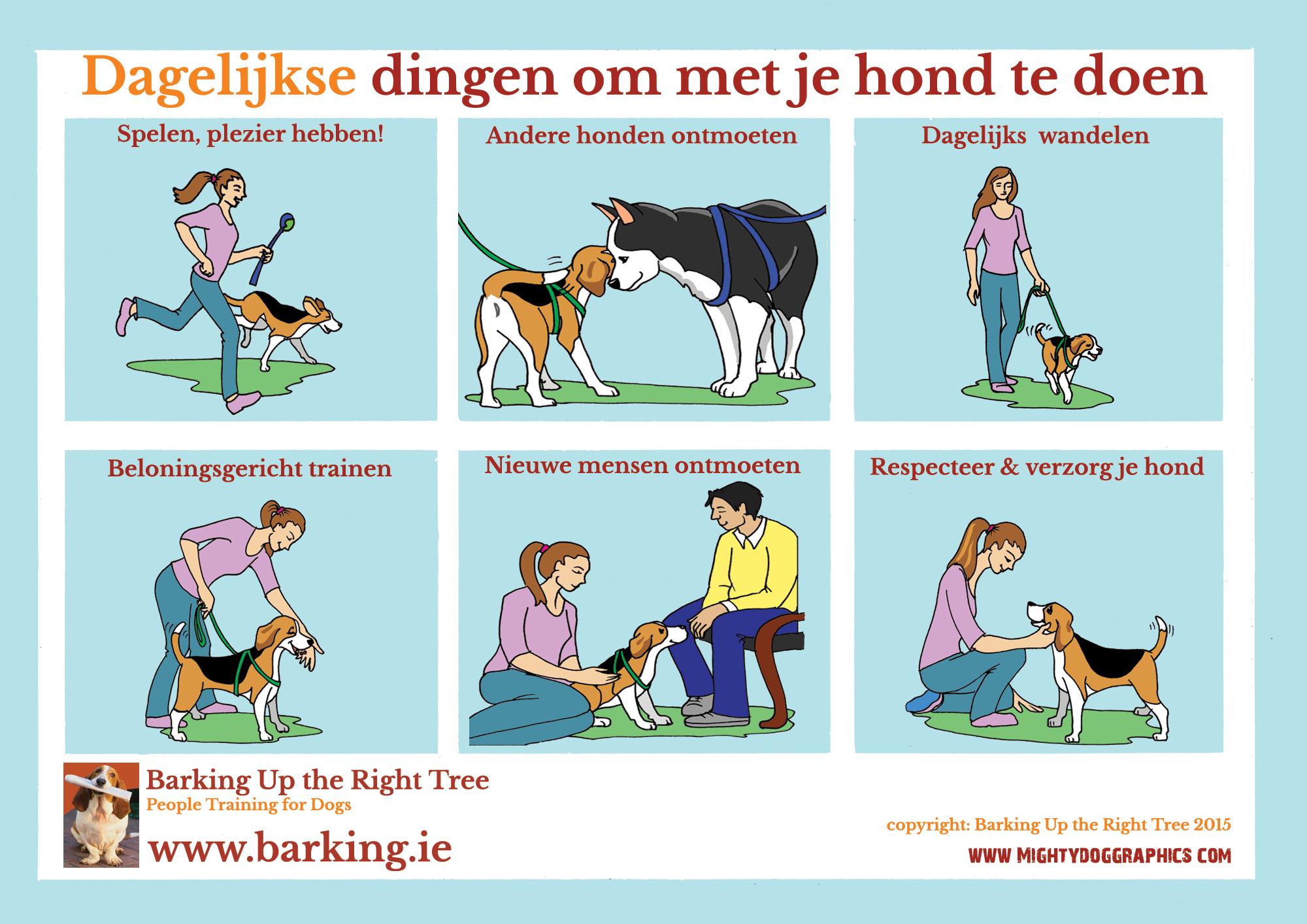 Dagelijkse dingen om met je hond te doen