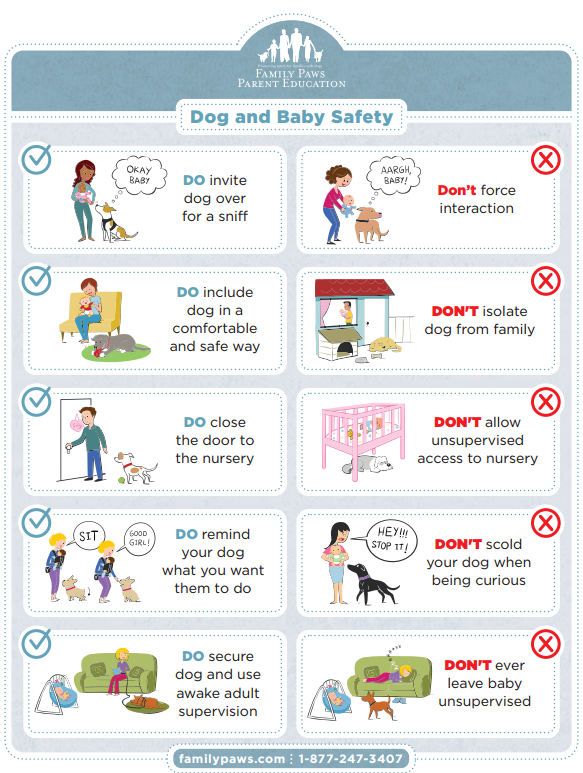 Veiligheid Hond en Baby