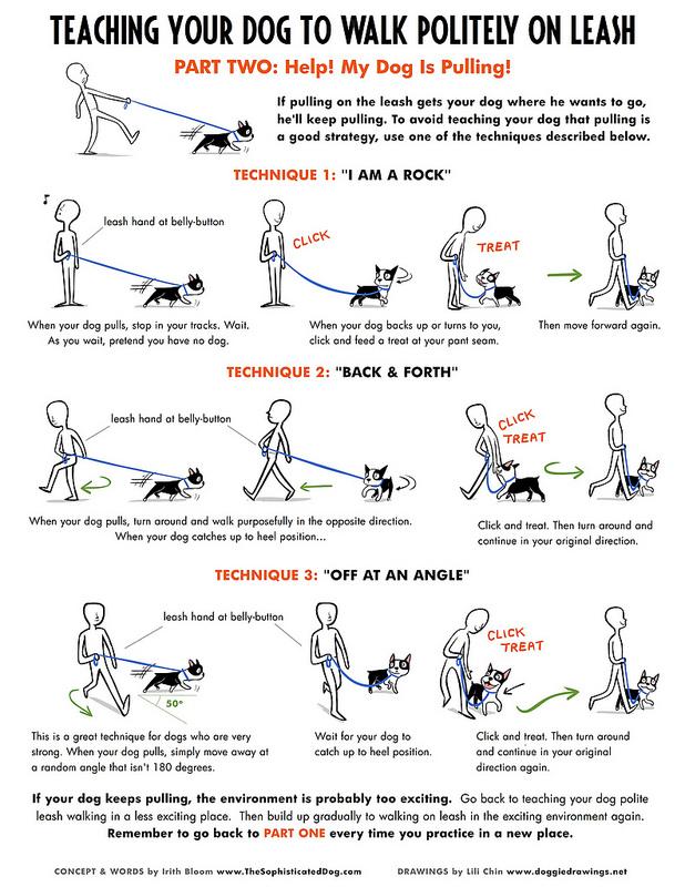 Hond netjes naast je laten lopen (deel 2)